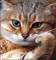 cat-picture-07