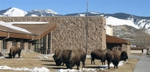 Travel Trip Yellowstone in Winter
