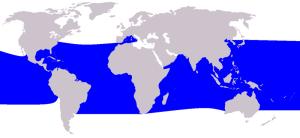 800px-cetacea_range_map_pygmy_killer_whale