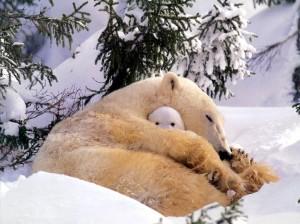 polar_bear_-_a_naughty_tot