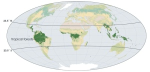 tropical-forests-of-the-world