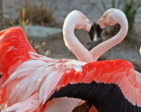animal-picture-flamingo-kjunstorm-photo