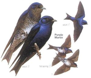 arrival-martin-purple