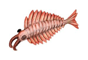 Anomalocaris is an ancient relative of the modern arthropods