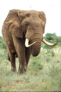 elephant-751451