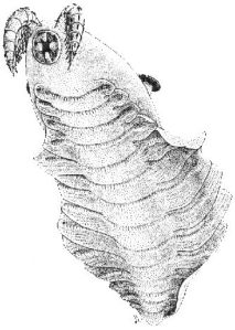 Laggania ancient relative of modern arthropods
