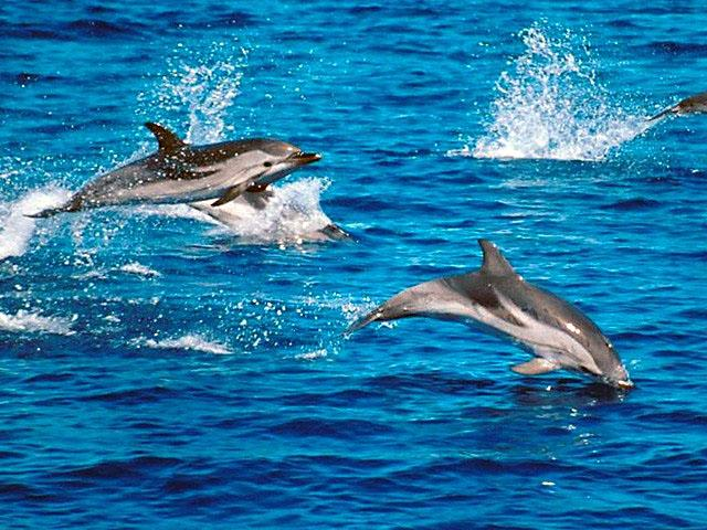 http://naturescrusaders.files.wordpress.com/2009/03/striped-dolphin6.jpg