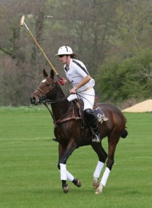 Healthy polo pony