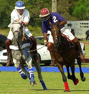 healthy polo horses