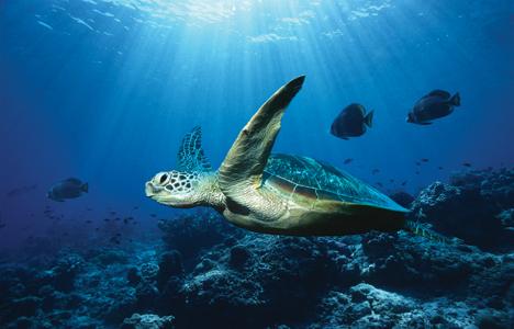 ocean turtle � Nature s