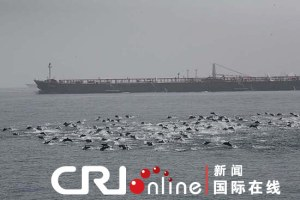 Dolphins form blockade
