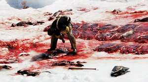 shooting thousands of seal pup
