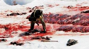 shooting thousands of seal pup