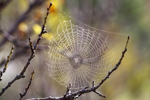 Örümcek Ağları... (yağmur sonrası halleri)