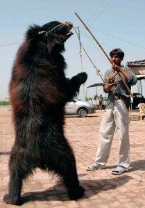 The dancing bears of India