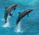 dolphins born to be wild and free
