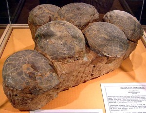 Museum specimen dino eggs