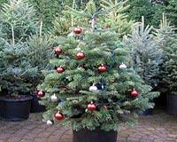 Eco Friendly Christmas Tree Rental