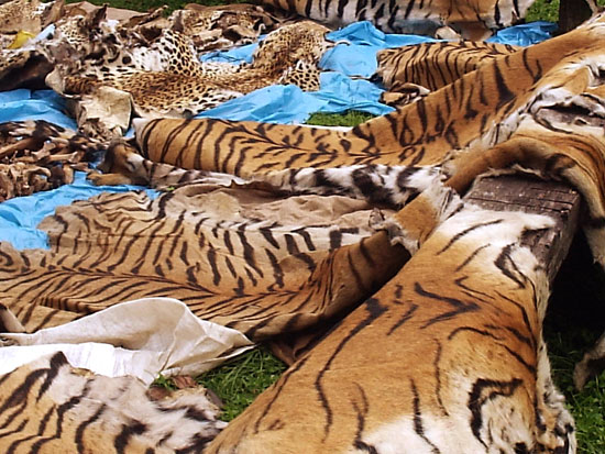 Image of: Extinction Endangered Animals Sold Illegally Natures Crusaders Wordpresscom Saving Endangered Animals Plants Natures Crusaders Page 14