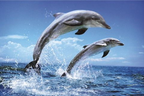 why dolphins love humans